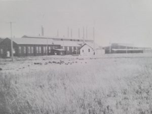 This is a black and white of the Manitoba Rolling Mills in 1920. It is a group of three long buildings and a white shed in a field.